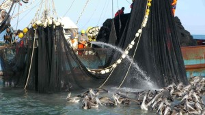 Crew members hose pelicans in an attempt to keep them out of nets